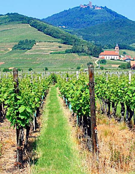 Randonnées Région Alsace 67 en Buggy